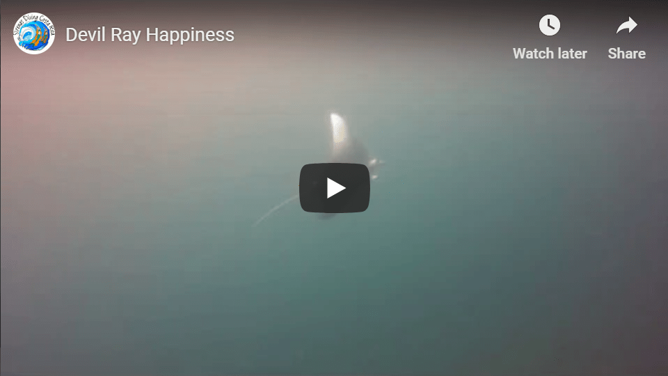 Devil Ray Happiness