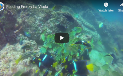 Feeding Frenzy La Viuda