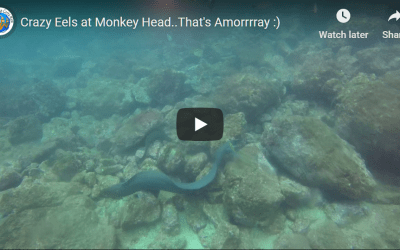 Crazy Eels at Monkey Head..That's Amorrrray :)