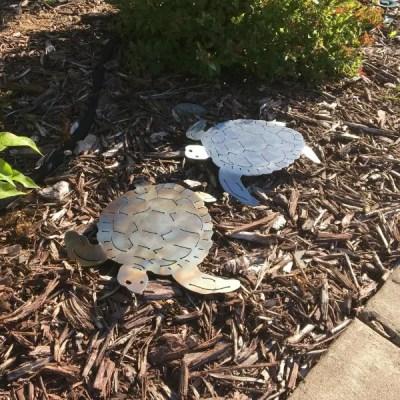 turtles garden