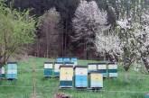 Sprečimo trovanje pčela