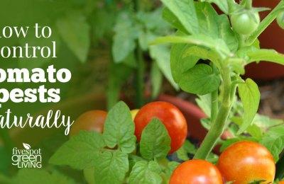 tomato organic pest control methods in tamil 1