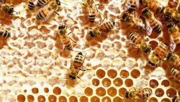 bee keeping traning theni