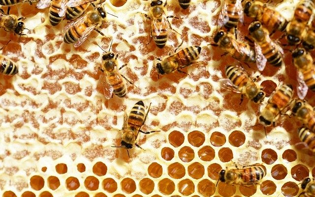 bees 345628 640