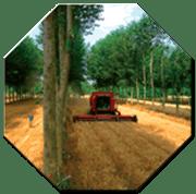 GdL SISEF: Agroforestry - Alberi, Colture, Allevamenti