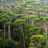 GdL SISEF: Biodiversità Forestale