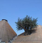 GdL SISEF: Tecnologia del legno ed Utilizzazioni forestali