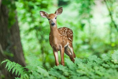 deer in field of green