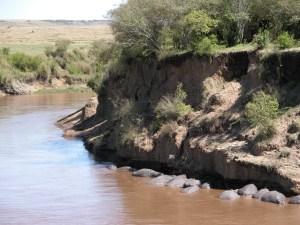 """肩を並べてカバの昼寝。小高い岸から川へ降りていけそうな場所を見つけた。そこは夜にカバが陸上へ出るための""""道""""なのだとか。"""