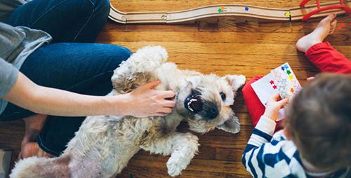 O que a saúde do seu cão diz sobre você mesma