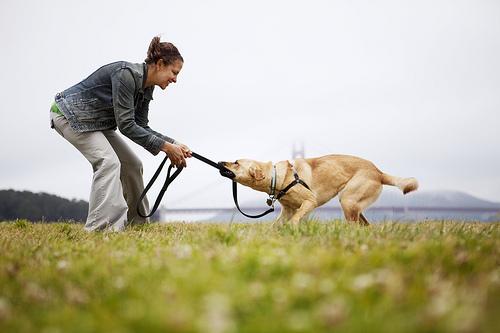 Mulher e um cão