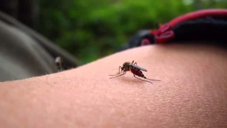 7 razões que explicam por que os mosquitos só picam você