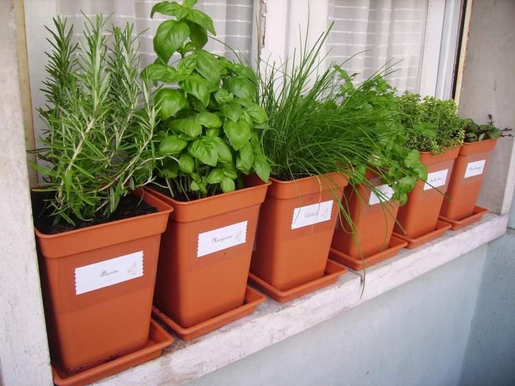 Plantas aromáticas para afastar as moscas da cozinha