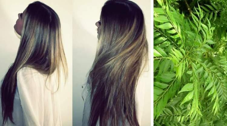 Receita de folhas de curry e óleo de coco para fazer o cabelo crescer mais rápido