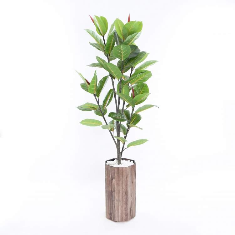 Seringueira é uma das plantas que podem ser cultivadas no escritório para reduzir o estresse