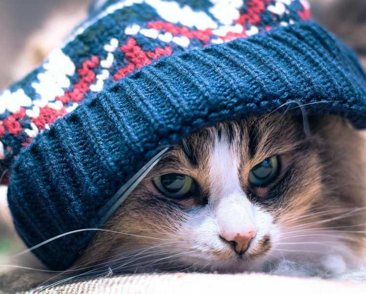 Dicas para proteger seu cão ou gato durante o inverno