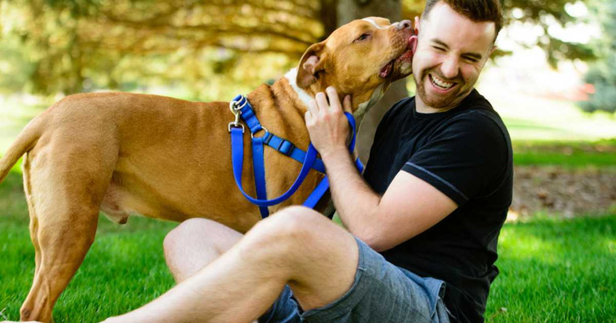 Descubra se os cães sentem falta dos donos quando eles saem