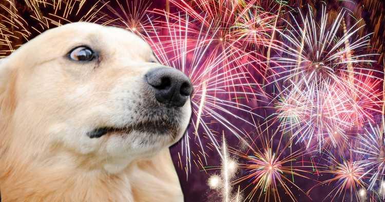 dicas para proteger o pet dos barulhos de fogos de artifício