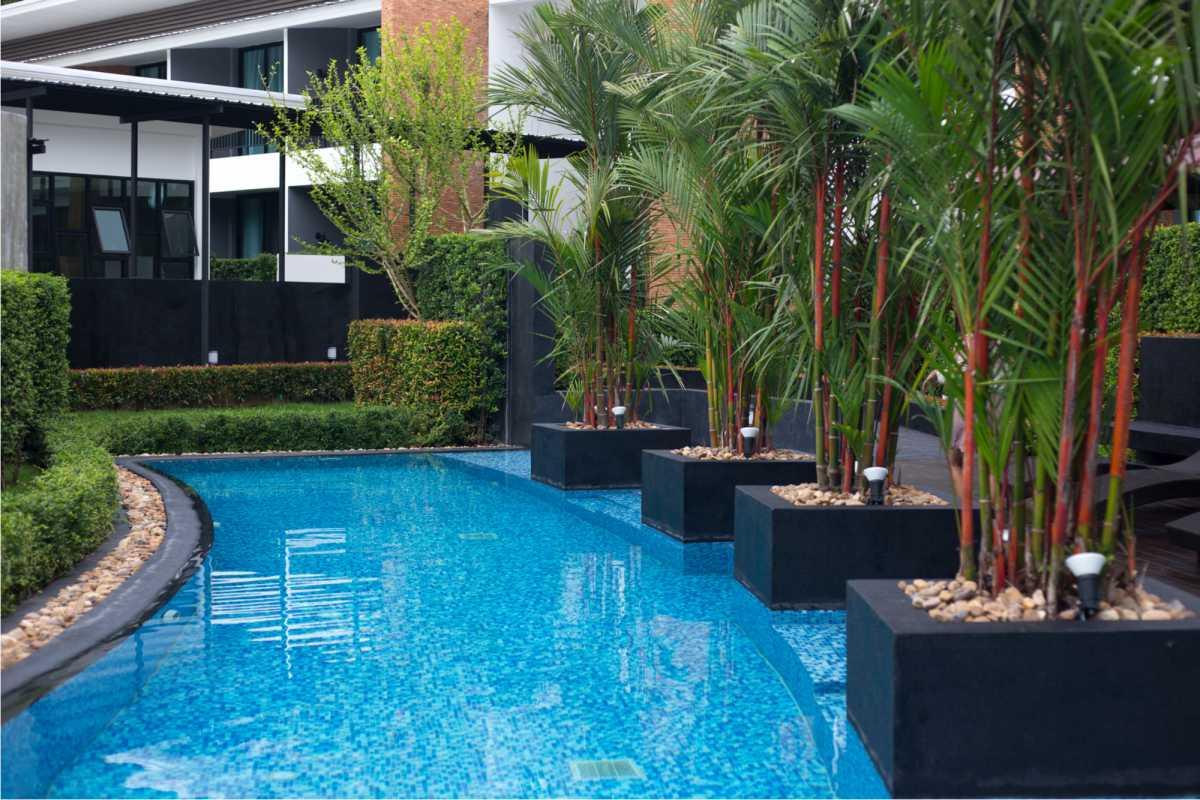 piscina pequena curva cercada por árvores