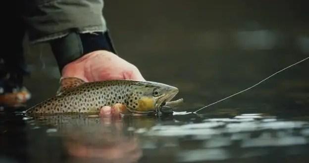 Pesca una trucha y encuentra un dedo humano dentro