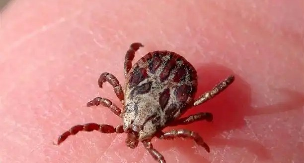 Enfermedades que se creían extintas y están de regreso