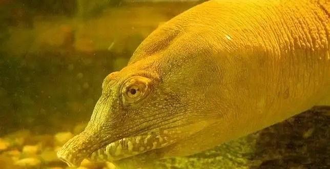 Hallan tortuga china que orina por la boca