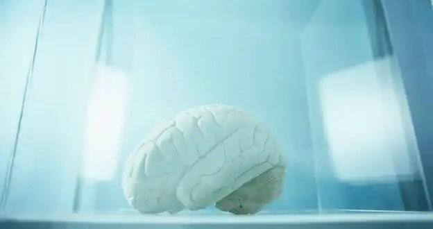 ¿Cuándo se declara la muerte cerebral?