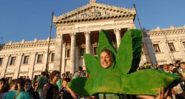 Furor en los consulados Uruguayos por la legalización de la marihuana