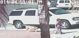 Increíble: gato salva a un niño del ataque de un perro