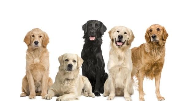 Cosas que los perros pueden predecir antes de que sucedan
