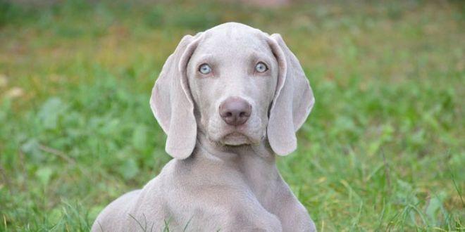 Qué raza de perro deberías adoptar según tu signo