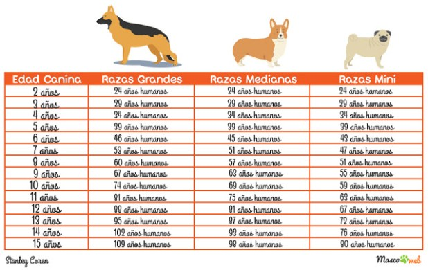 Cual es la edad humana exacta de un perro