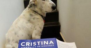"""El perro que se """"devoró"""" el libro de Cristina Kirchner"""