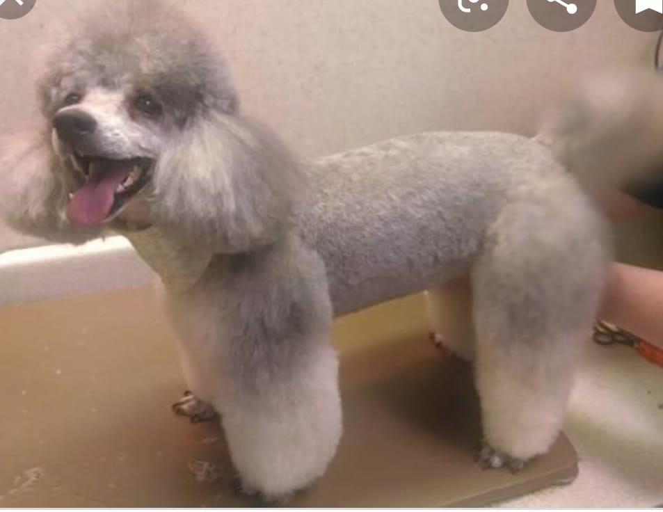 peluqueria 1
