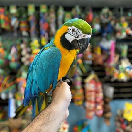 macaws,