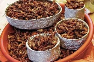 Proponen comer insectos para combatir el hambre