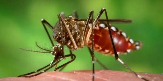 Conoce cuáles qué cosas provocan que los mosquitos te piquen