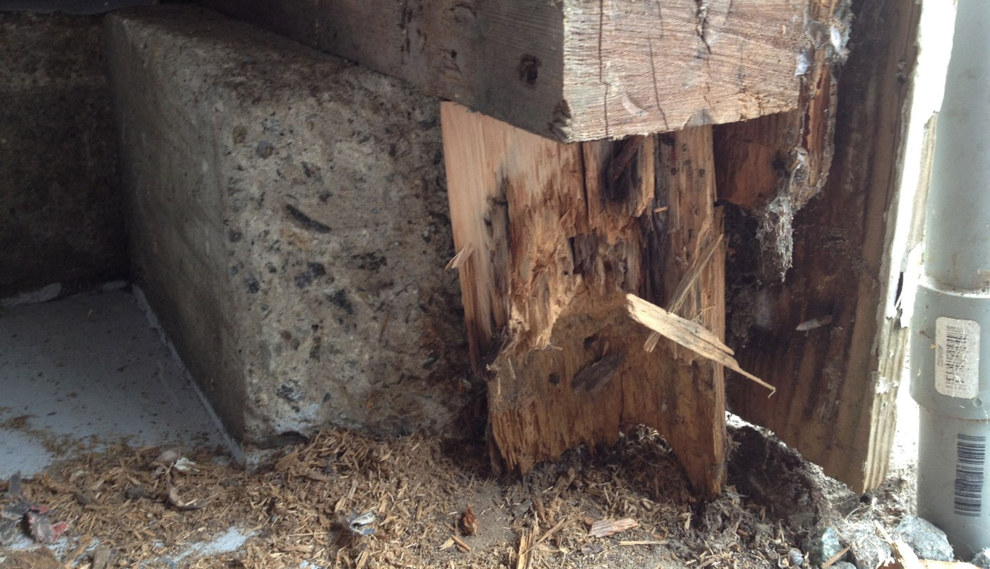 replacing some rotten wood before the new door arrives