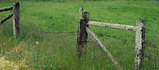 2 posts and some barbed + chicken wire doesn't equal fully fenced.