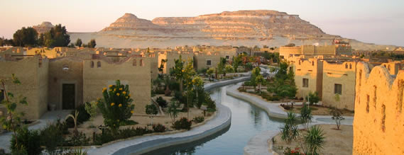 Image result for siwa oasis