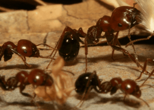Ants (Source: Antropology)