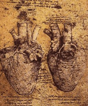 Da Vinci's drawing of an anatomical heart (Source: Wikimedia Commons)
