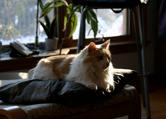 Fluffy, the Donnay family cat (Source: Michael Donnay)