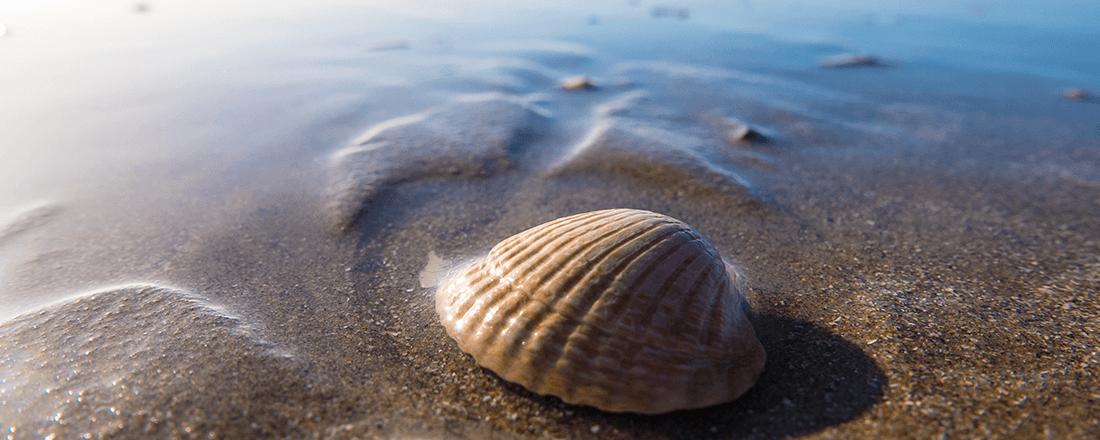 Seashell by the Shore