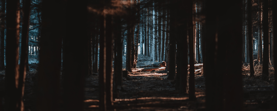 Opening in the Forest