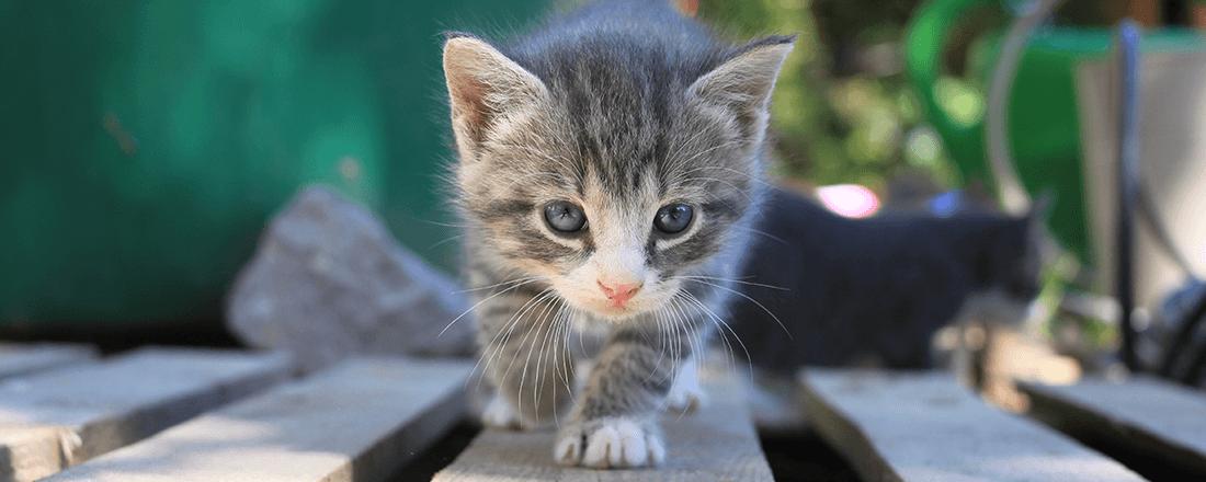 Kitten Pounce