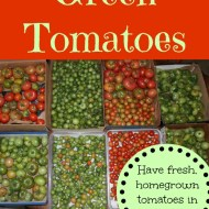 Storing Green Tomatoes