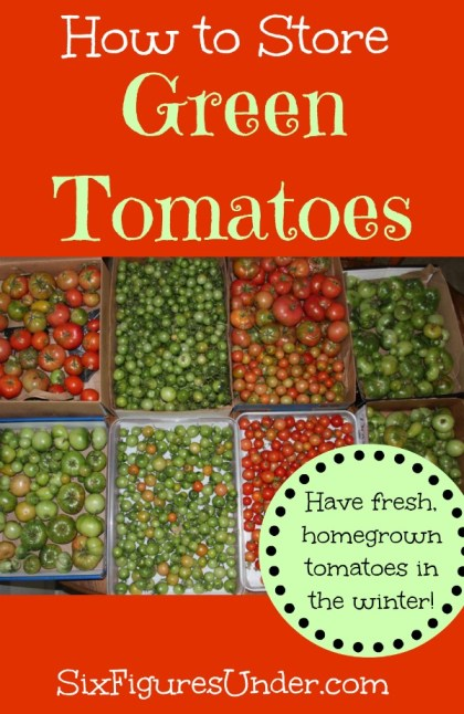 Don't let any of your harvest go to waste! Learn how to pick and store green tomatoes so you can have tomatoes ripening in the winter!