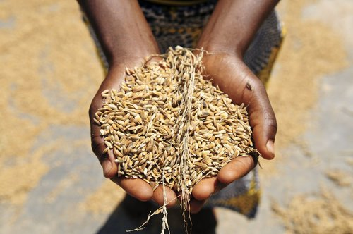 Give a gift of lasting change by providing drought resistent seeds.