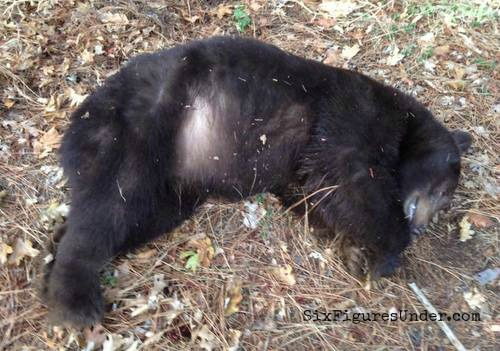 The bear my husband hit on his way home one night. No, we didn't eat it.